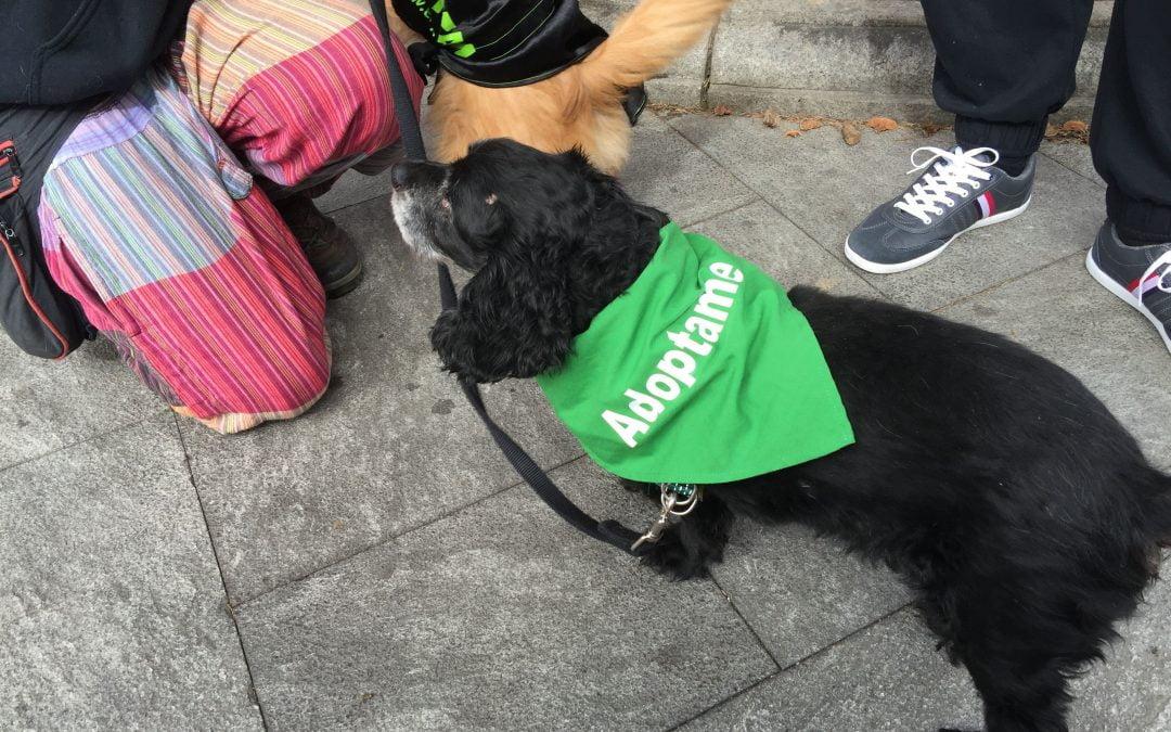 Multitudinario desfile de mascotas en el Barrio