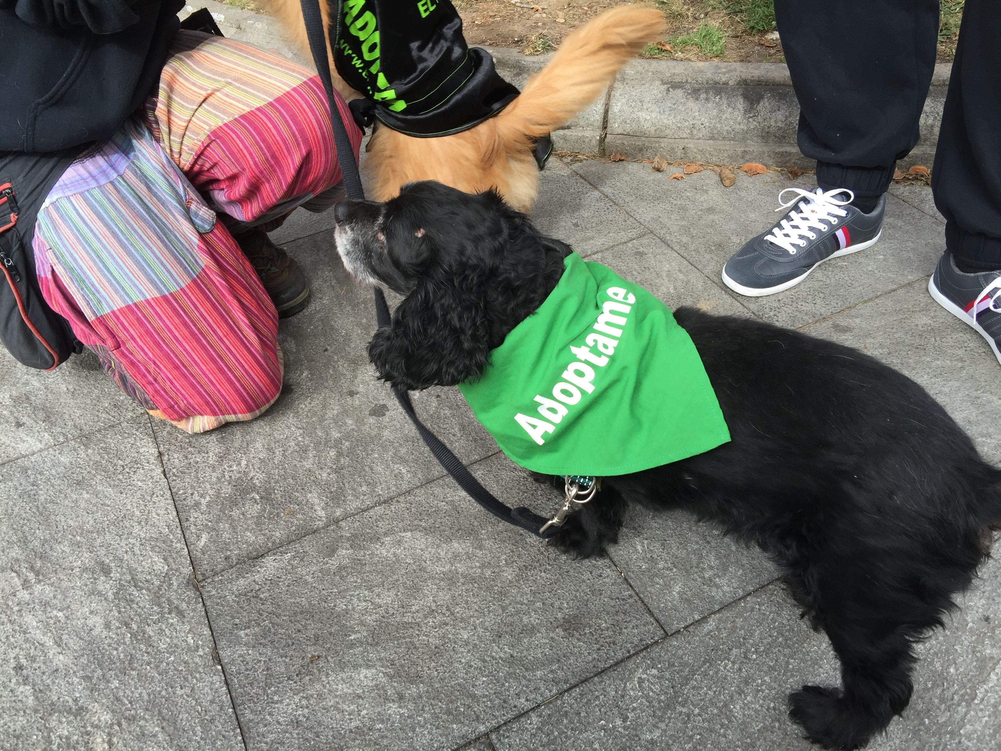Photo of Multitudinario desfile de mascotas en el Barrio