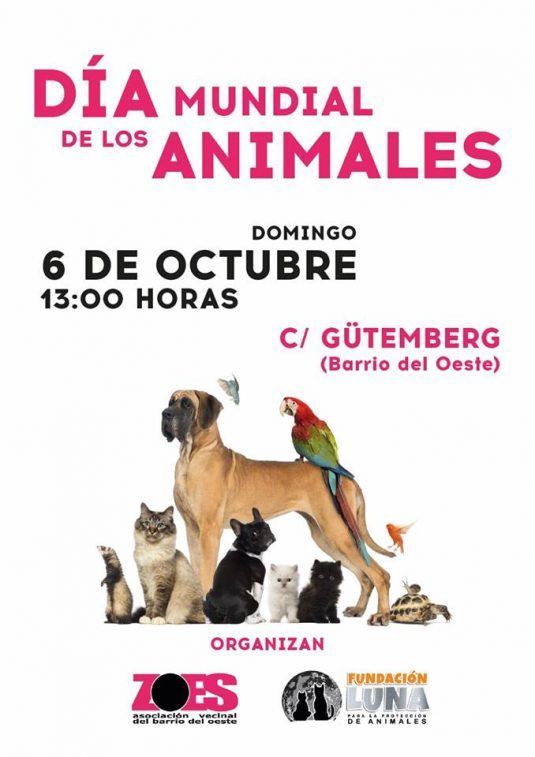 Photo of Día Mundial de los Animales